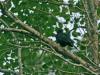 blackbird_sweden