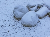 snowonrocks_1